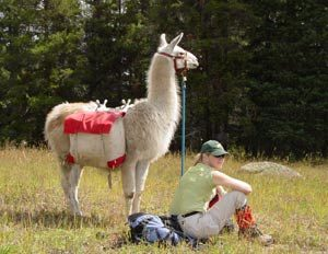 llama-leasing