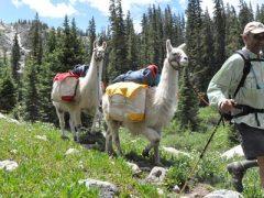 Llama Leasing