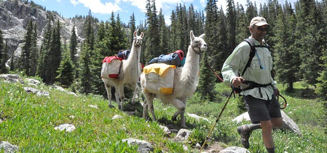 llama-trecking3