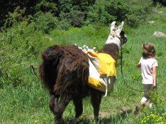 Take a Llama to Lunch