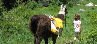 Take a Llama to Lunch!