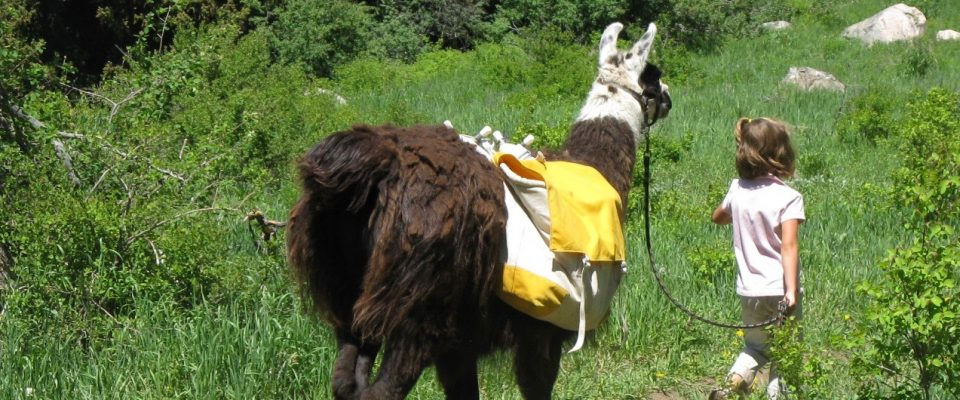 Take a Llama to Lunch